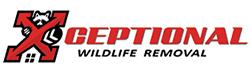 Lexington Wildlife Removal